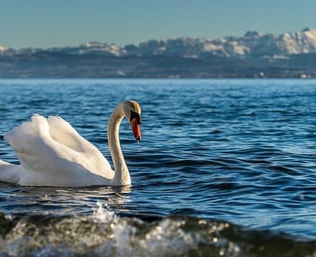 Халяль отели Боденского озера халяль отдых 7